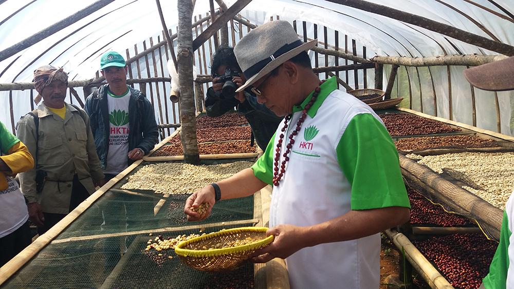 Jenderal TNI (Purn) Dr. Moeldoko, menjemur kopi hasil pencucian di kebun kopi Gunung Puntang  Desa Campaka Mulya, Kec. Cimaung , Selasa (29/5/18).